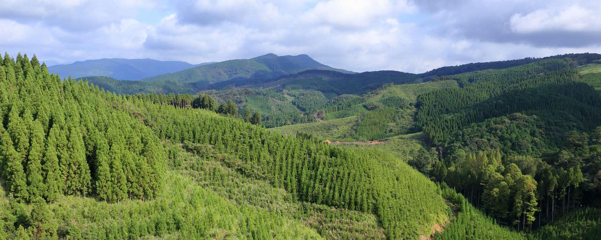 宮崎県 飫肥杉の山